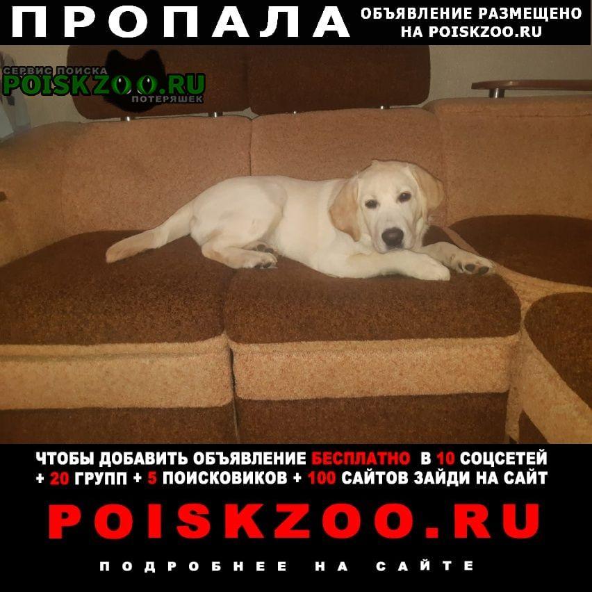 Пропала собака кобель Новоалтайск