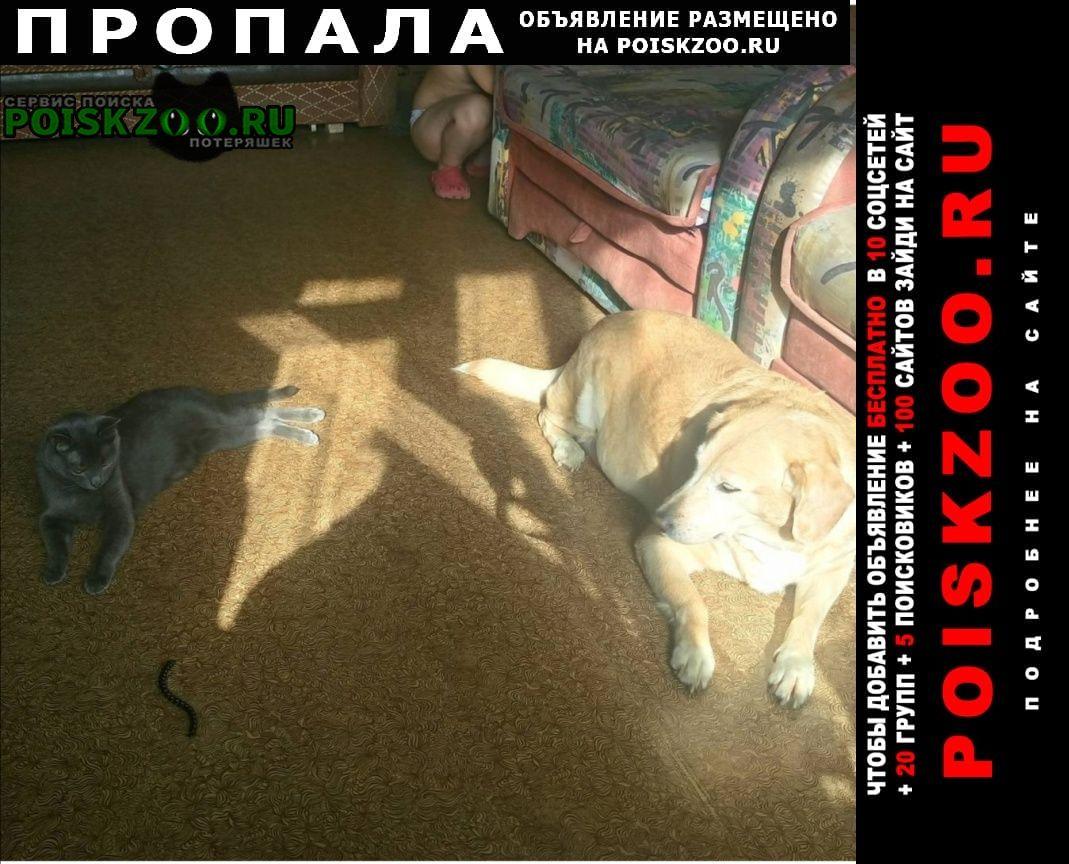 Пропала собака любимица Электросталь