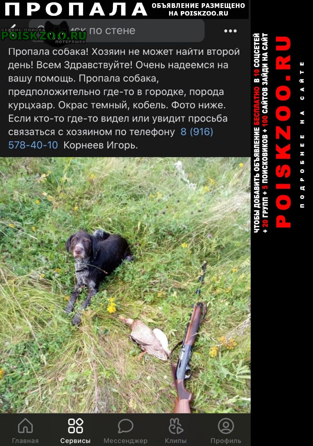 Сергиев Посад Пропала собака кобель