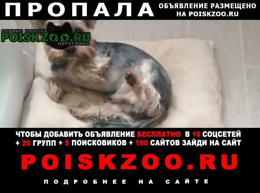 Пропала собака кобель йоркширский терьер Чалтырь