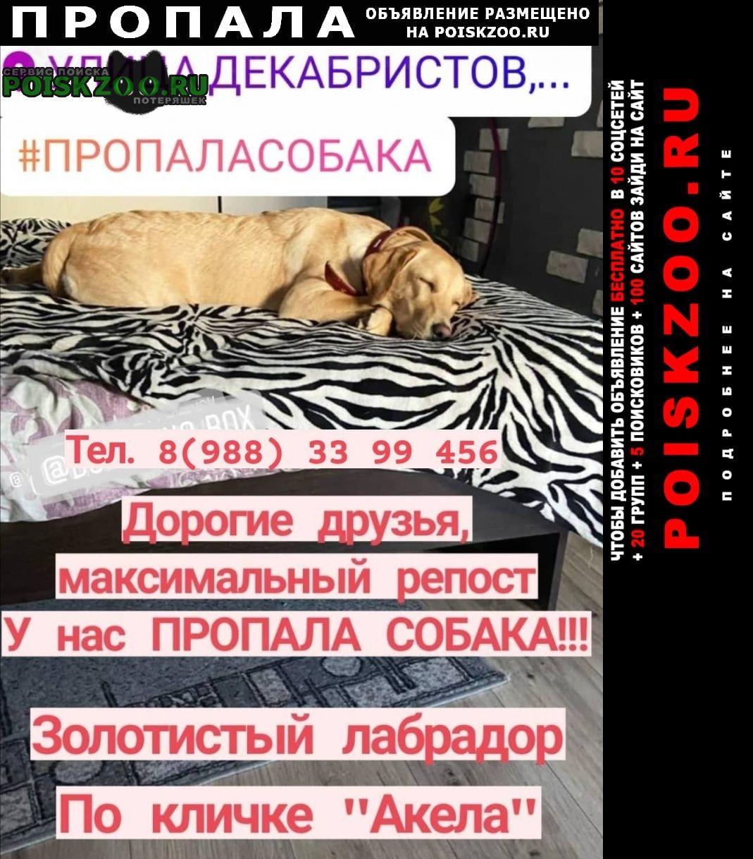 Новороссийск Пропала собака центр города