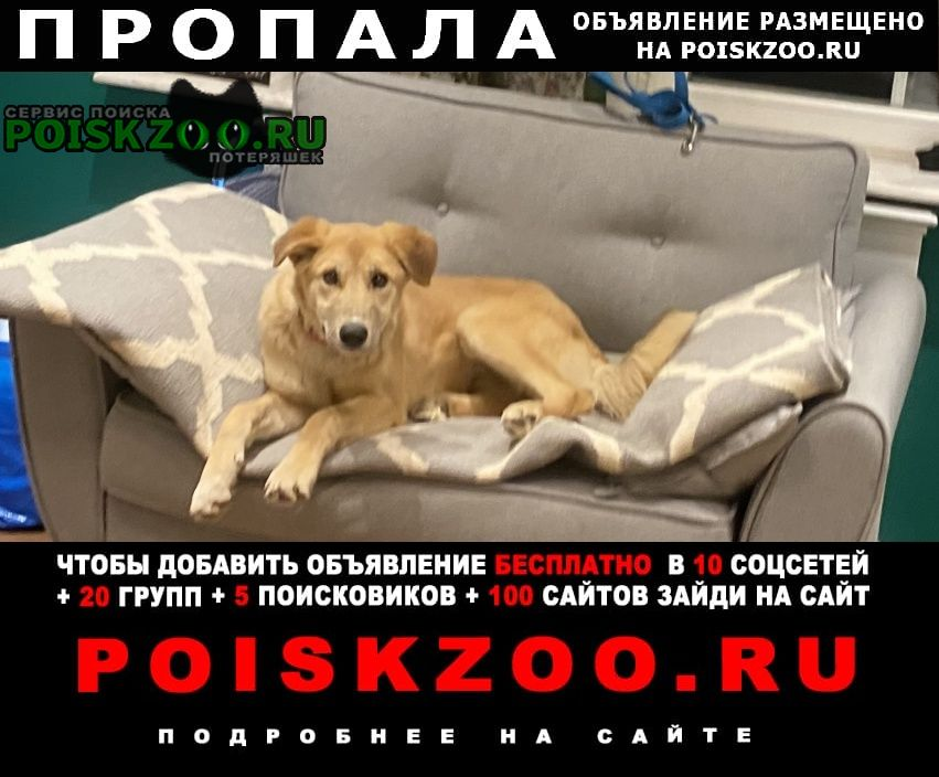 Пропала собака прошу максимальной помощи Ясногорск