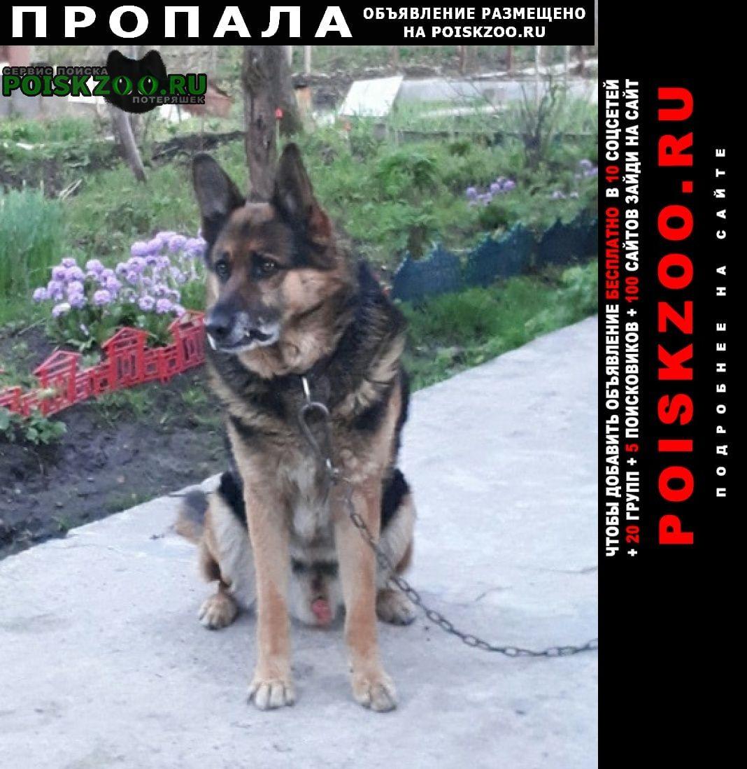 Санкт-Петербург Пропала собака кобель