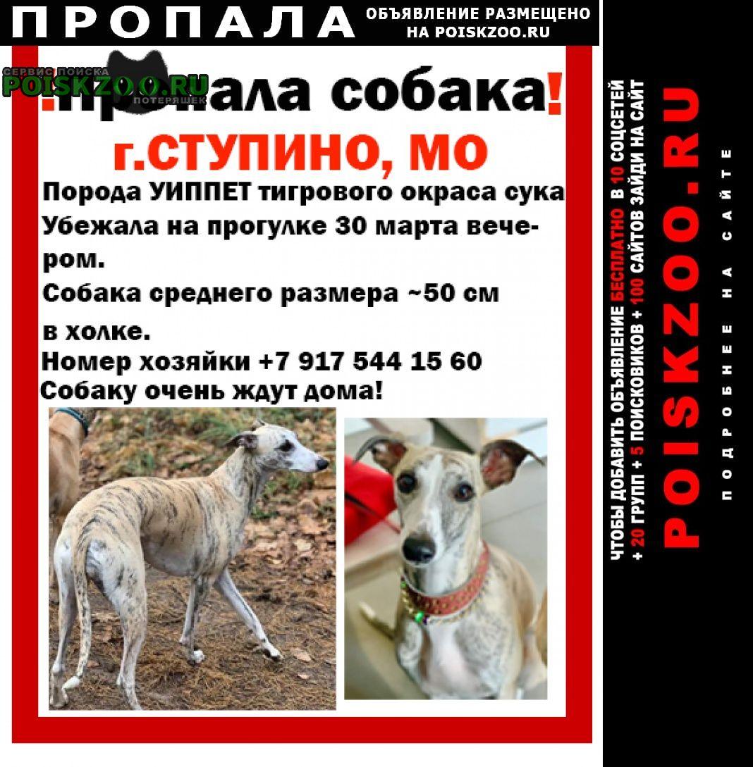 Пропала собака порода уиппет Ступино
