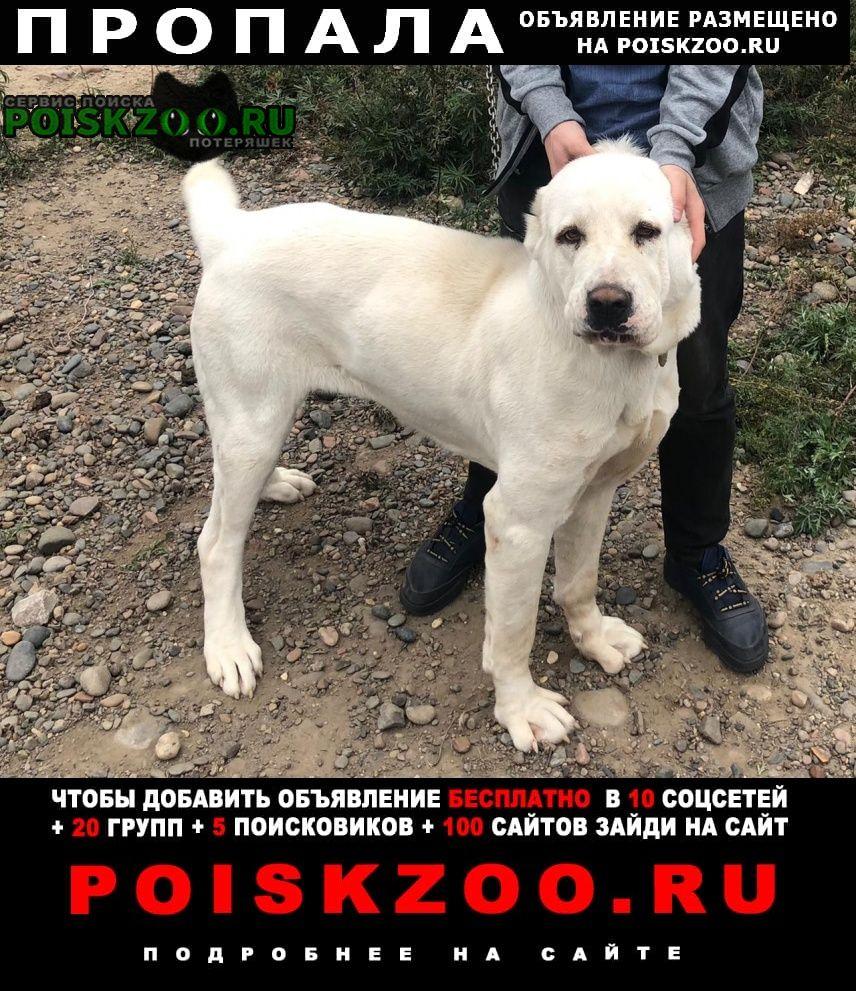 Пропала собака алабай Красноярск