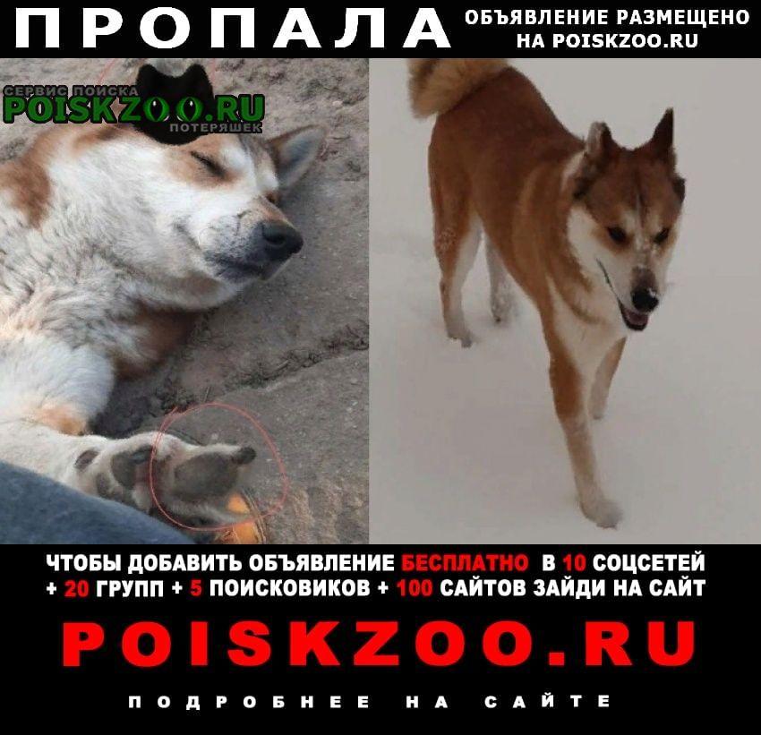 Пропала собака кобель Витебск