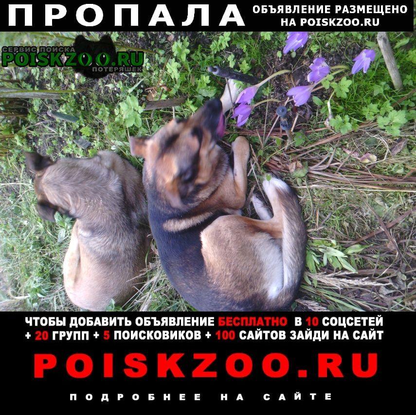 Пропала собака кобель пес Москва