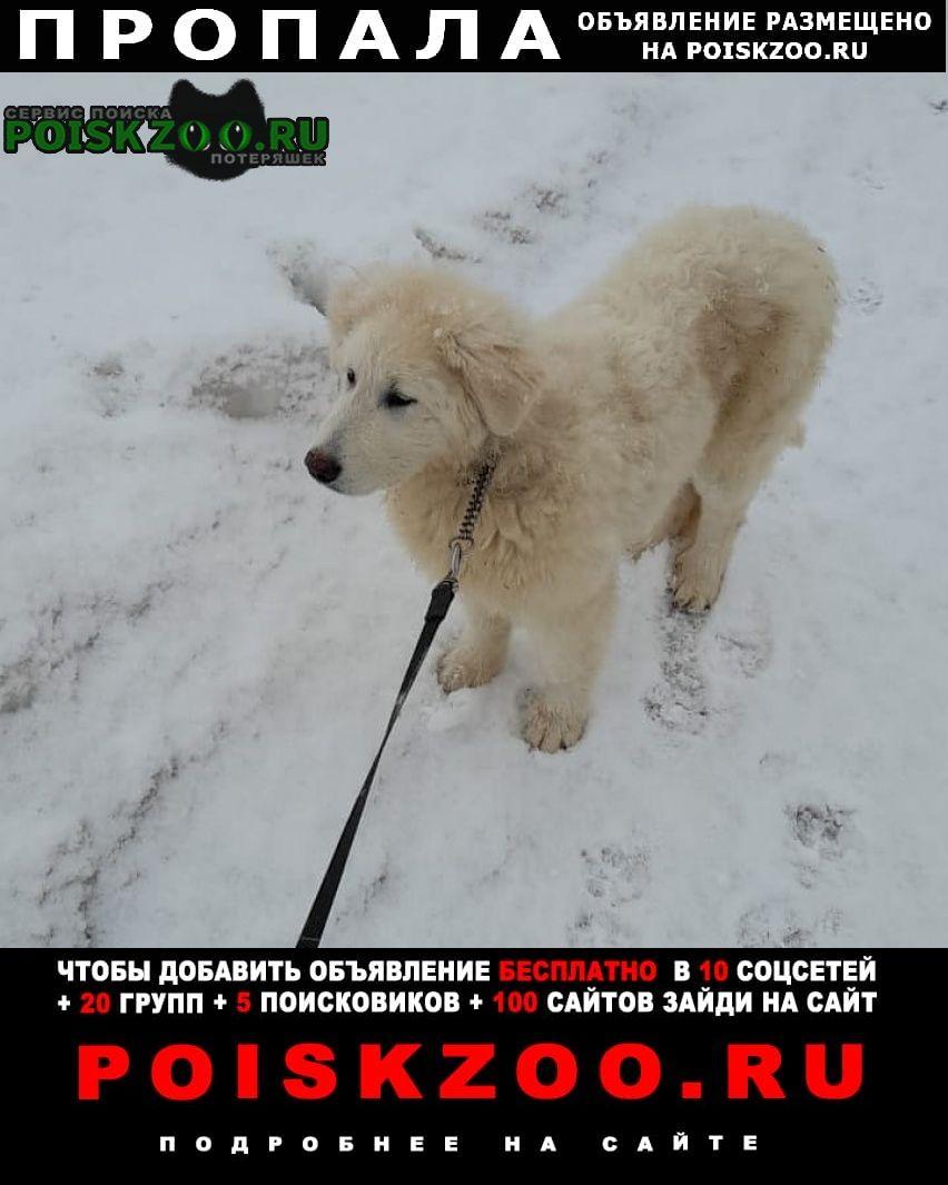 Пропала собака кобель Люберцы