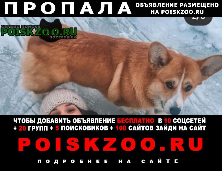 Пропала собака кобель Ярославль