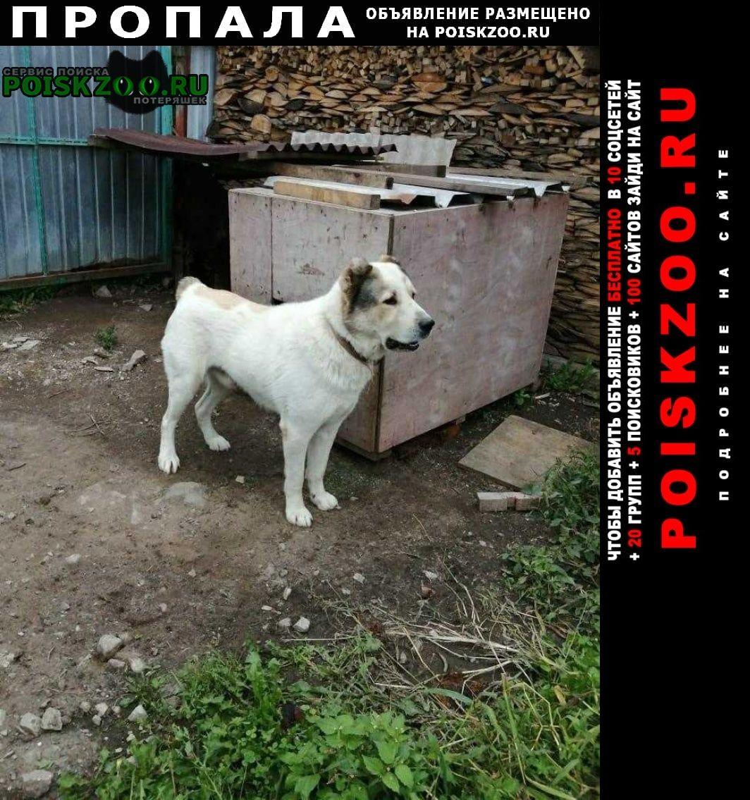 Пропала собака кобель алобай Артем