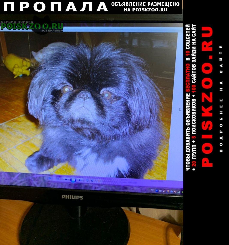 Пропала собака кобель Луховицы