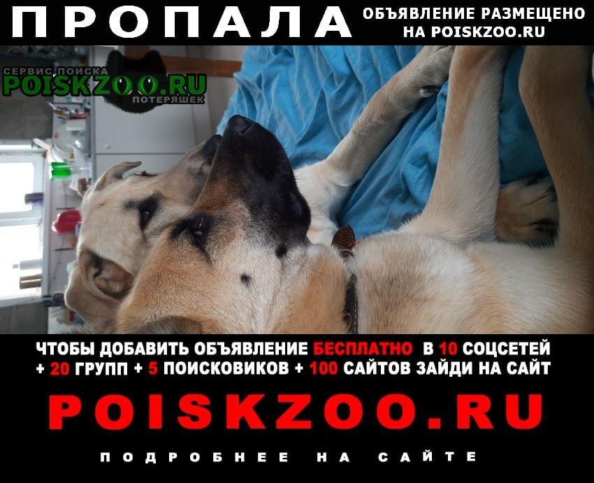 Пропала собака на ж.д. станц. Михнево