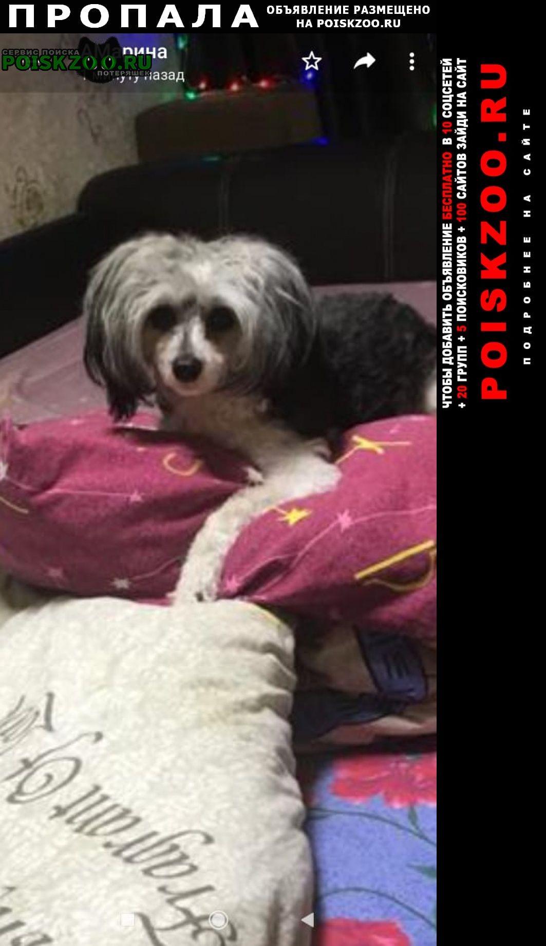 Хабаровск Пропала собака китайская хохлатая
