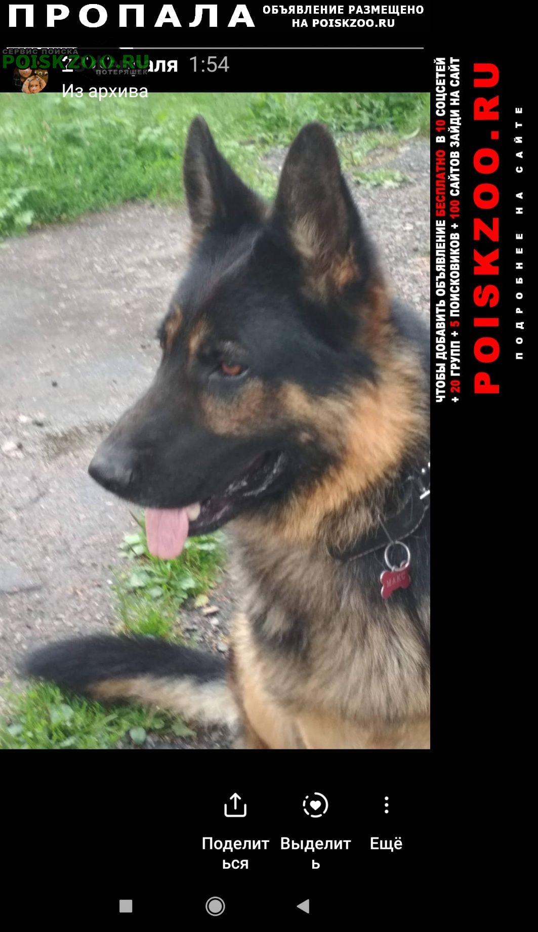 Пропала собака кобель осташковское шоссе, челобитьево. Мытищи