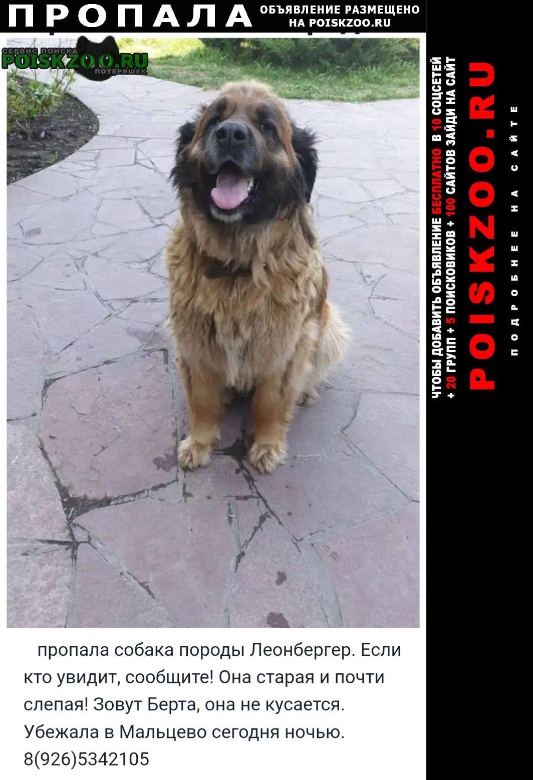 Щелково Пропала собака