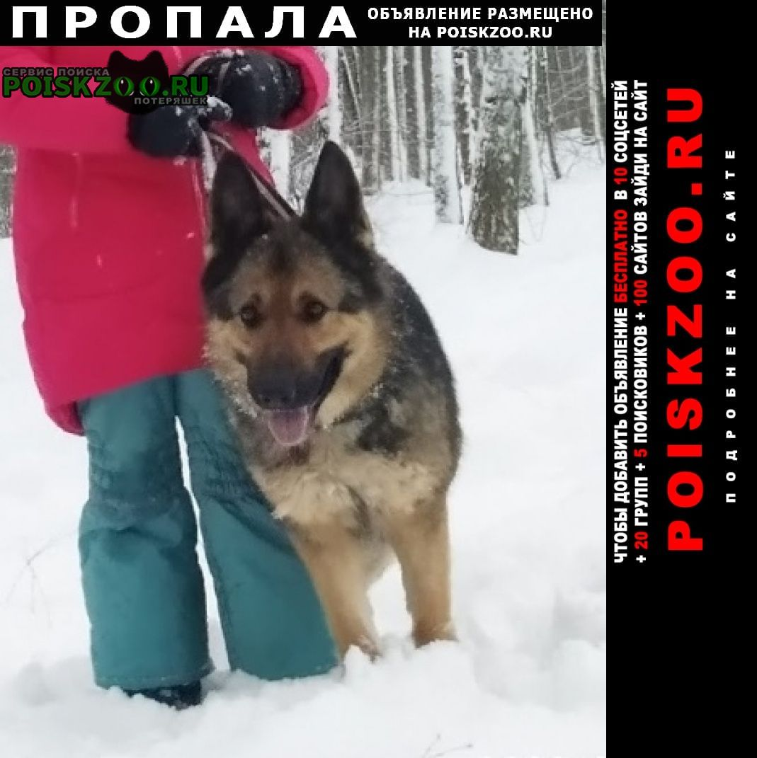 Пропала собака немецкая овчарка Ростов-на-Дону