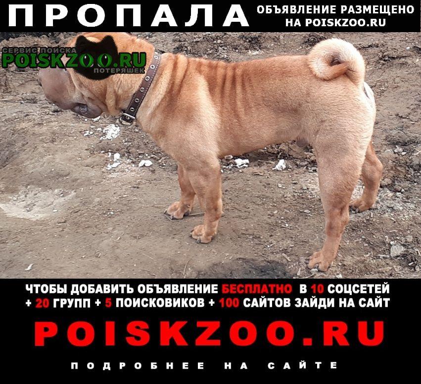 Пропала собака кобель наш член семьи порода шарпей Иркутск