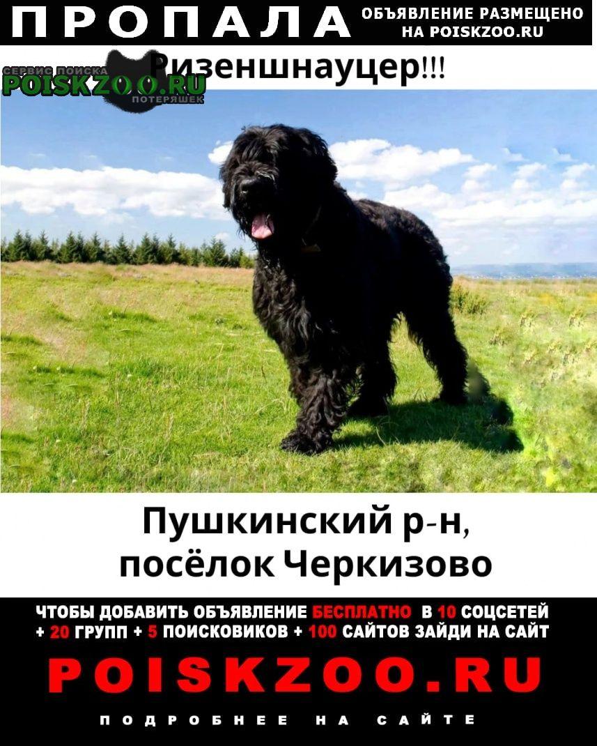 Пропала собака кобель Черкизово