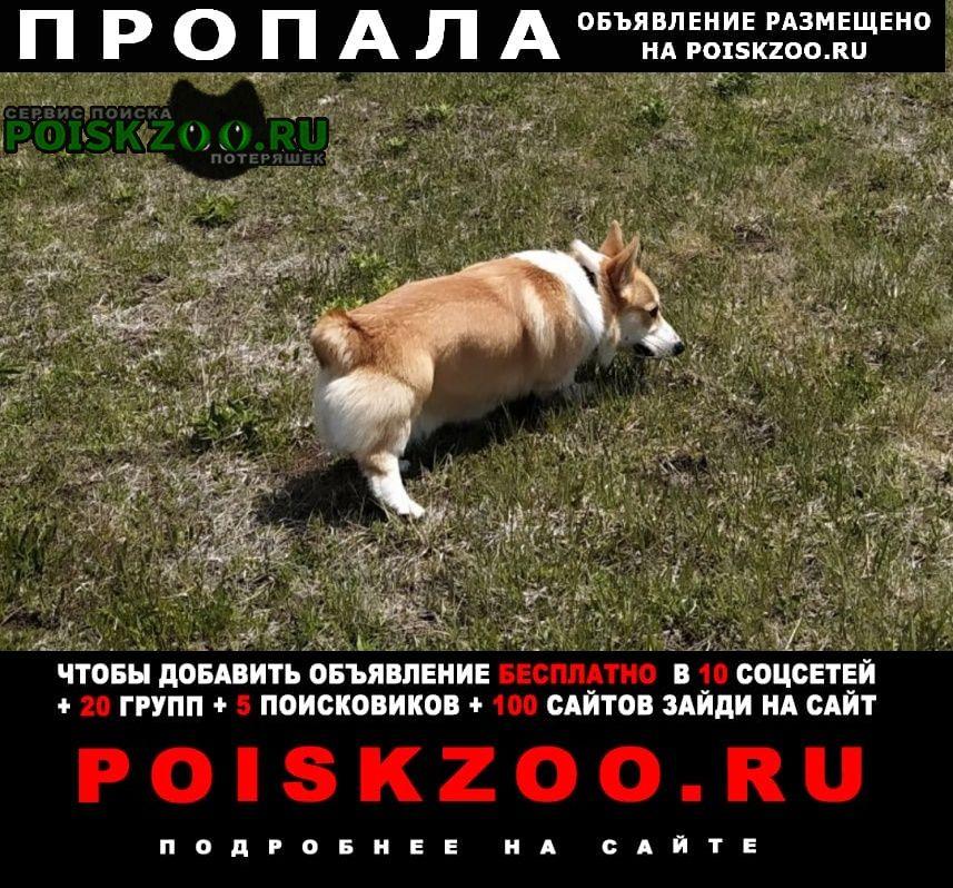 Пропала собака кобель помогите найти Севастополь