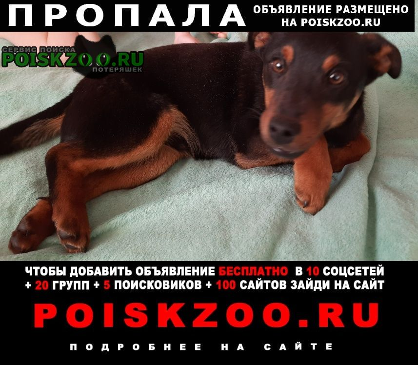 Пропала собака кобель Городище (Волгоградская обл.)