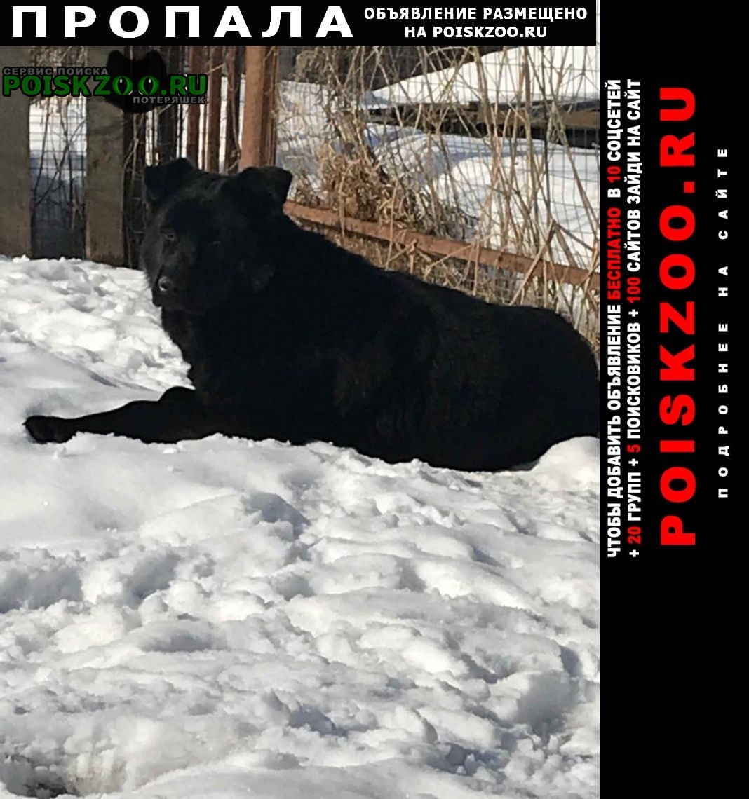 Пропала собака кобель помогите нати Дмитров