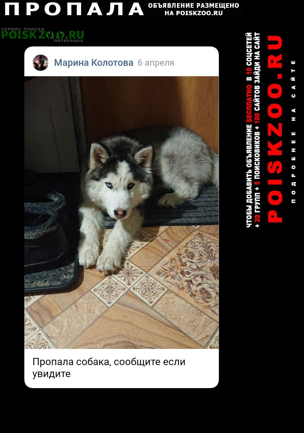 Пропала собака хаски Узловая