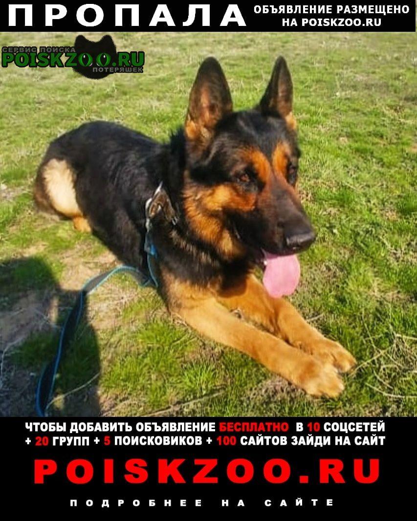 Пропала собака кобель Волгоград