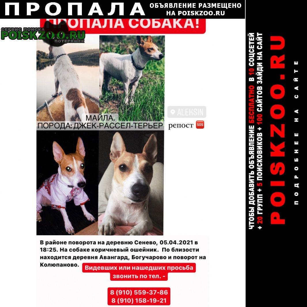 Пропала собака Алексин