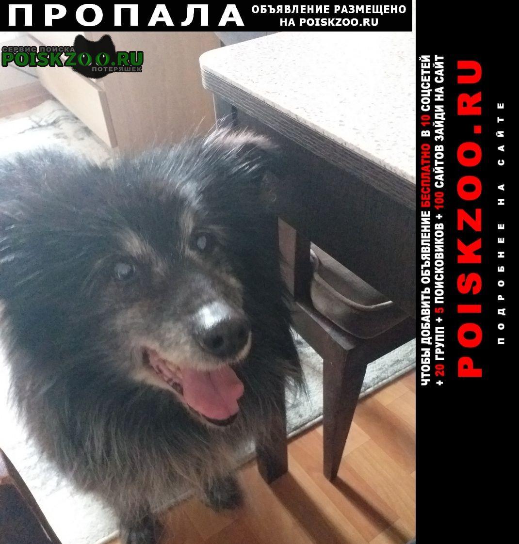 Иркутск Пропала собака кобель