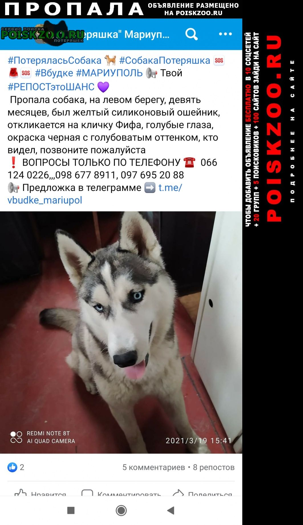 Пропала собака хаски Мариуполь