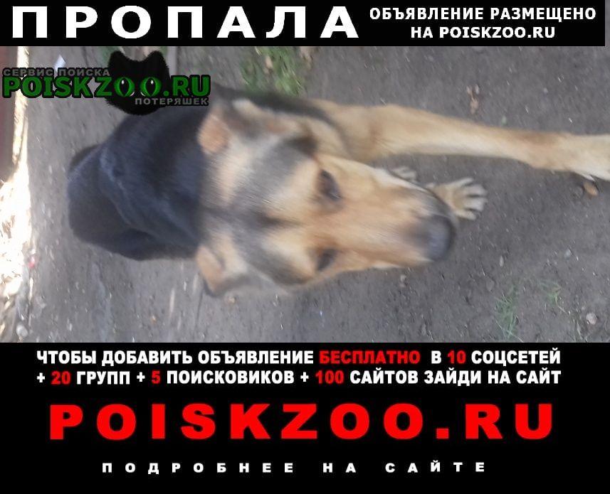 Санкт-Петербург Пропала собака кобель пес кличка ричь