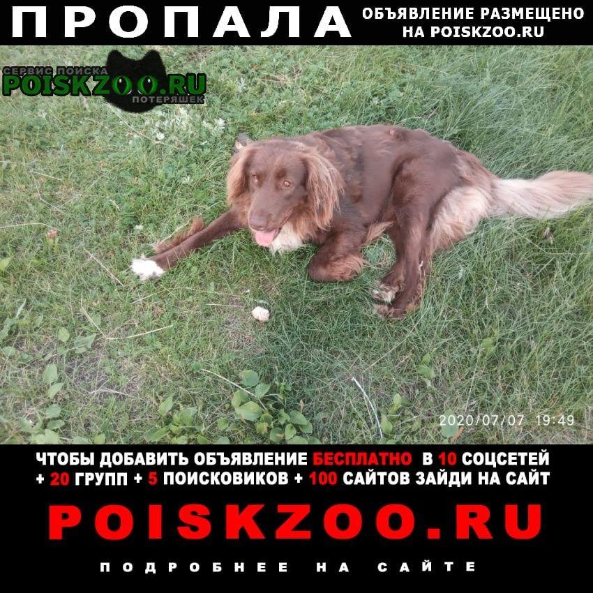 Пропала собака кобель хороший пёс Белозёрский