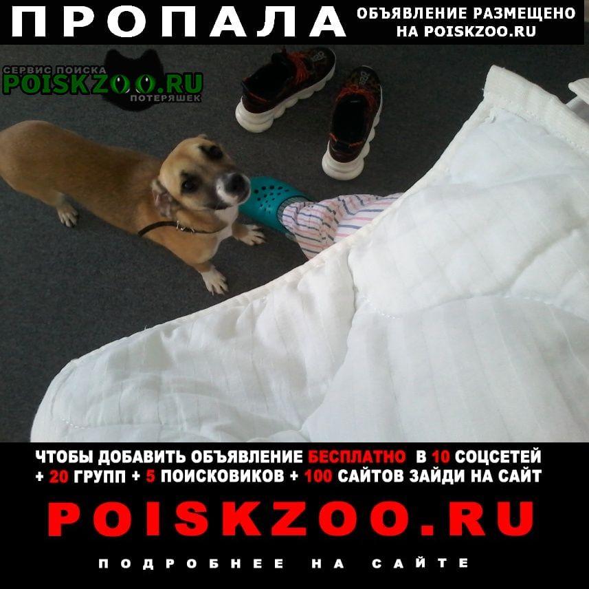 Пропала собака помогите найти собаку Краснодар