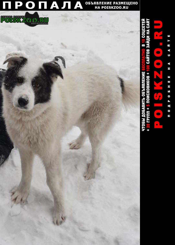 Пропала собака кобель Ставрополь