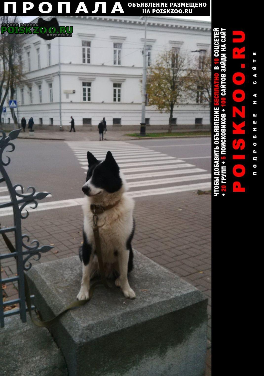 Полтава Пропала собака кобель лайка