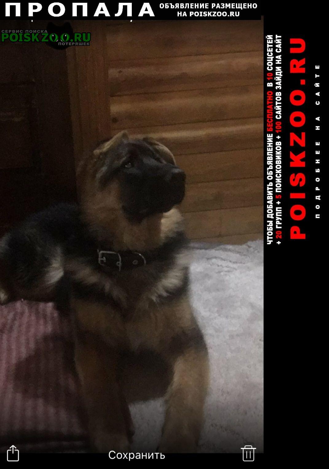 Пропала собака Нижневартовск
