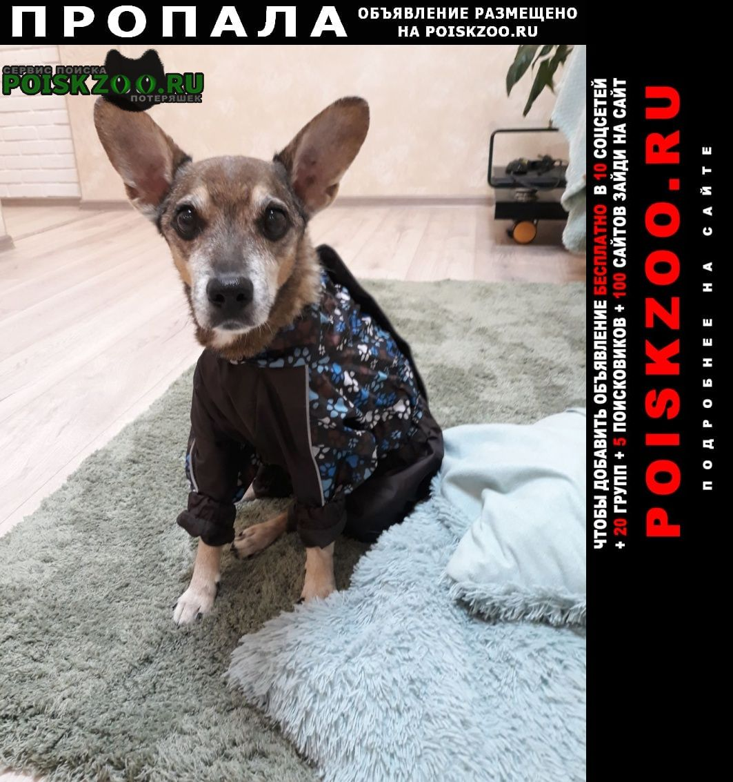 Пропала собака кобель помогите за вознаграждение Ангарск