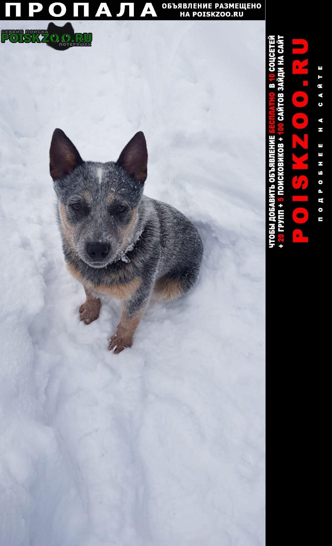 Санкт-Петербург Пропала собака
