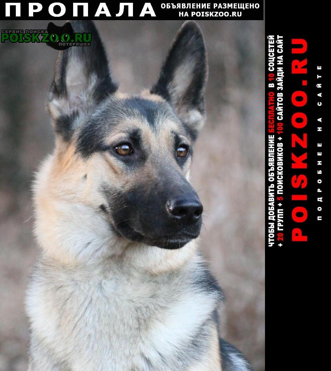 Пропала собака кобель Московский