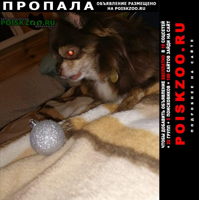 Пропала собака кобель Ступино