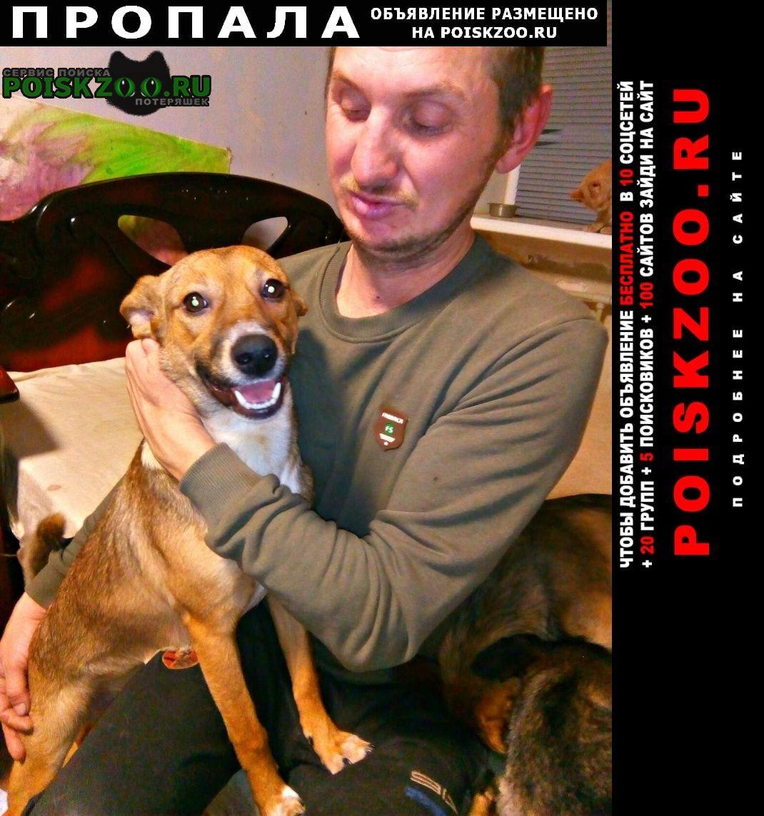 Волгоград Пропала собака кобель домашняя дворняжка