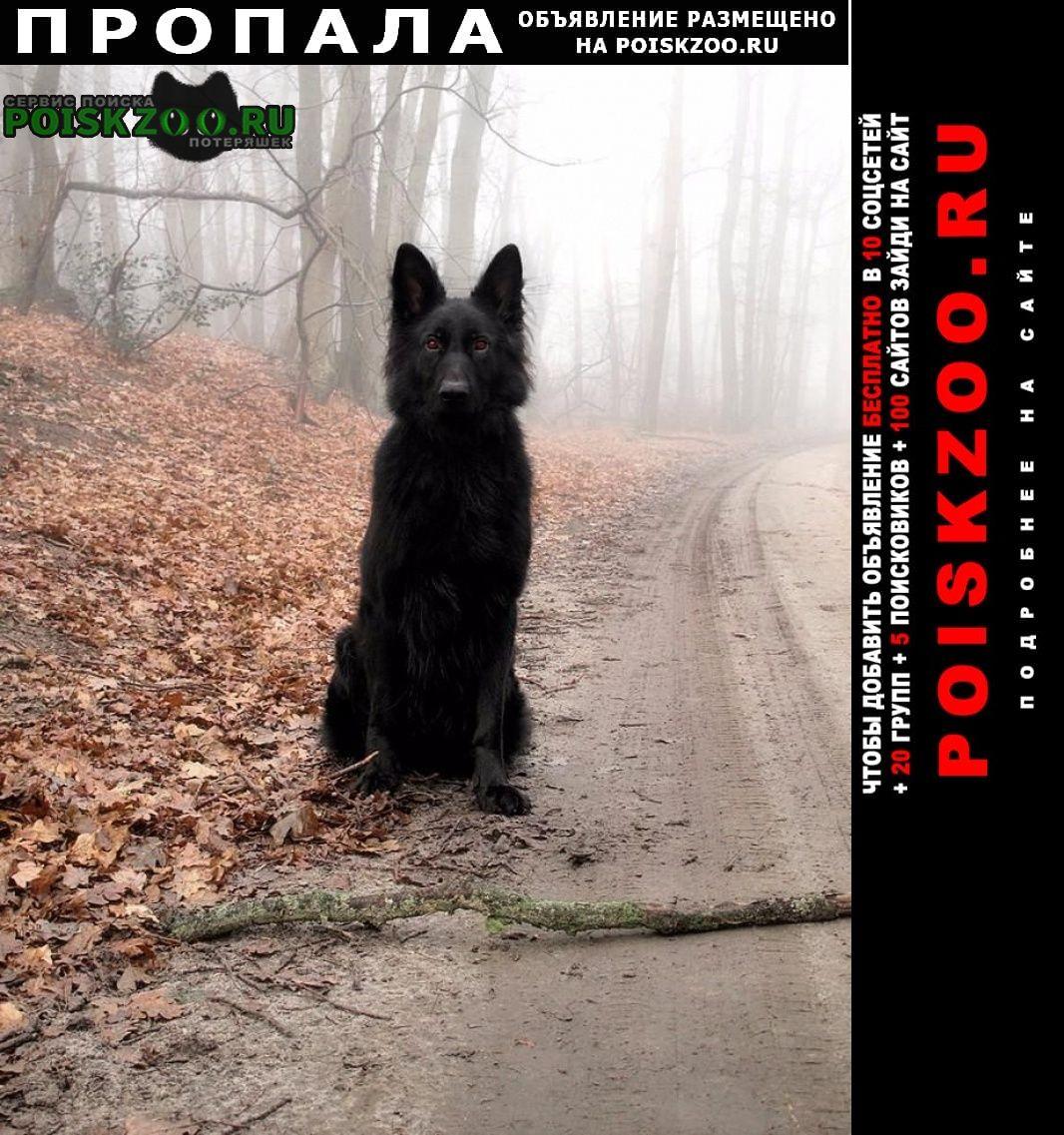 Пропала собака кобель Ангарск
