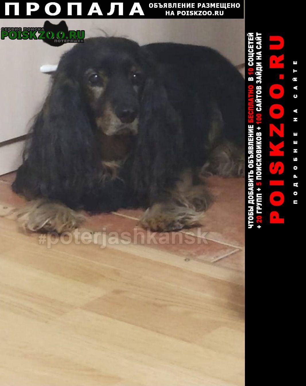 Пропала собака кобель черный русский спаниель Новосибирск