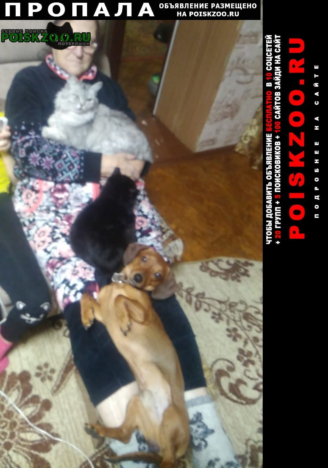 Пропала собака Барнаул