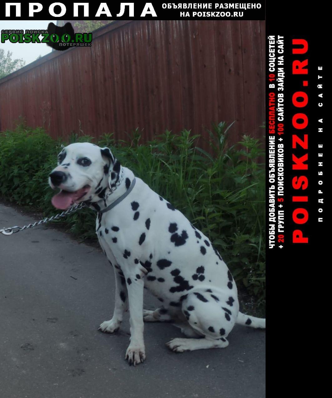 Пропала собака кобель далматин 12 апреля вечером 3 почтовое от Люберцы