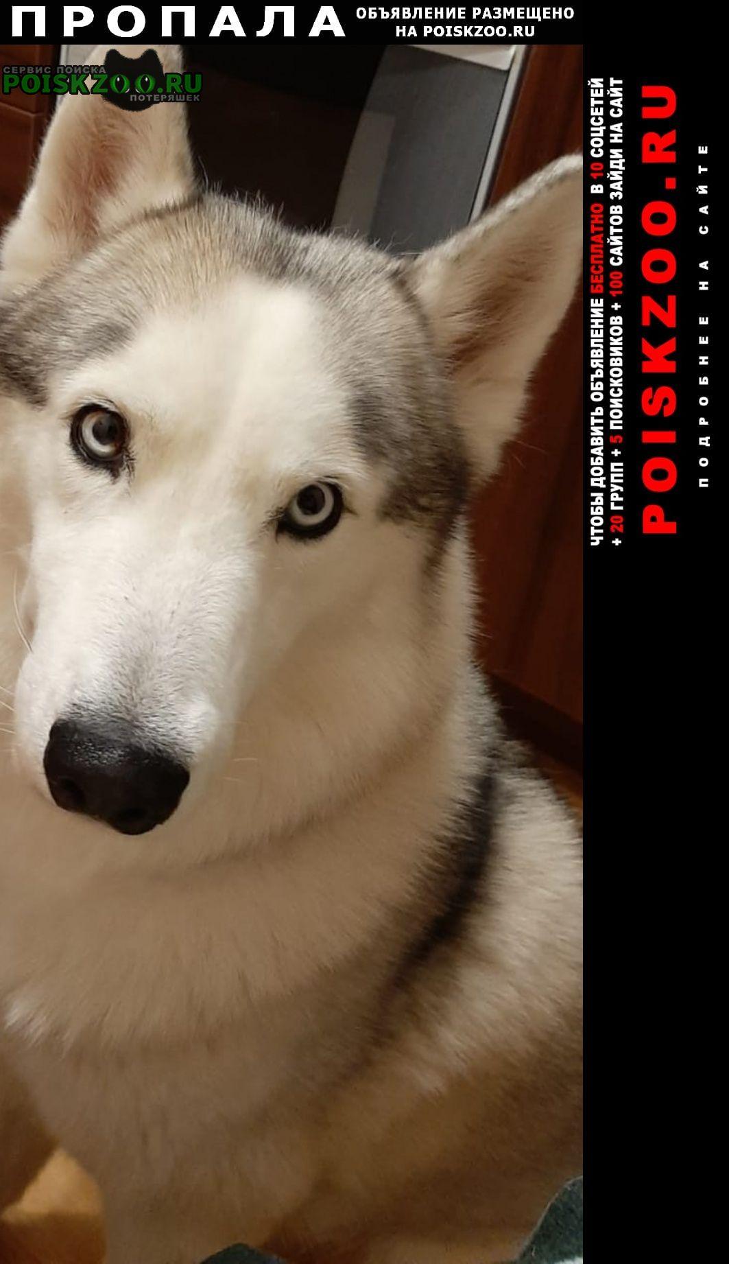 Пропала собака кобель помогите найти Буденновск