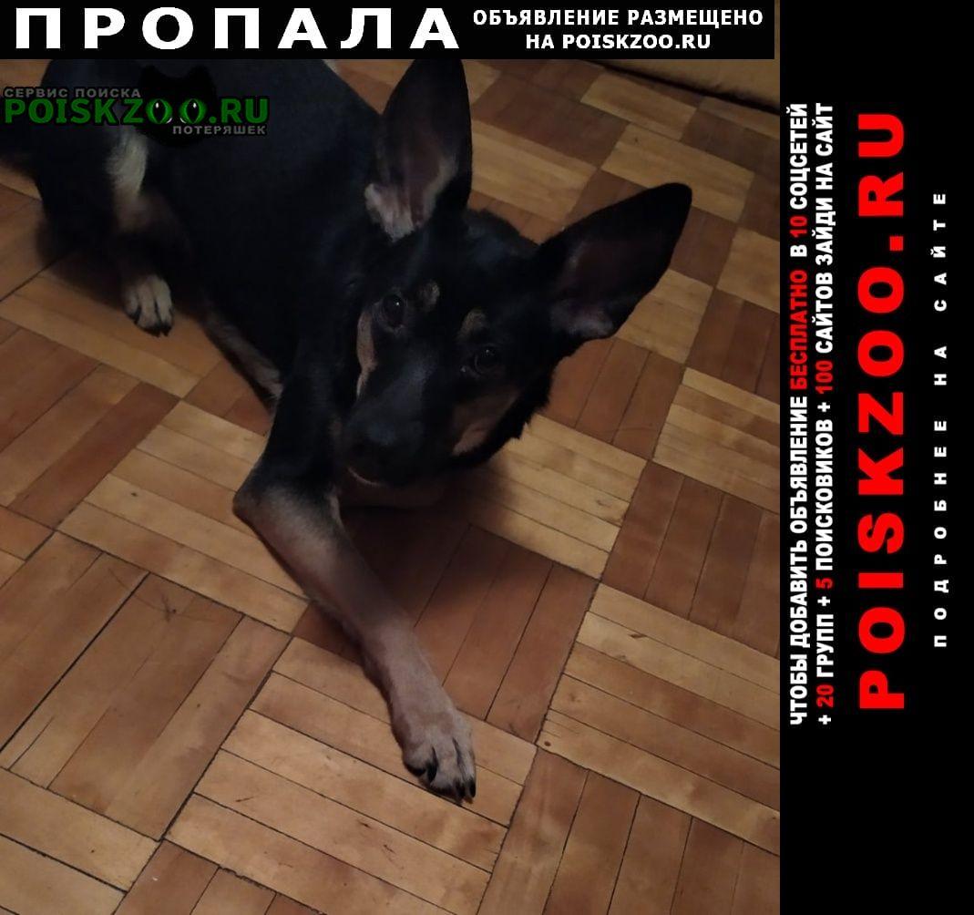 Нижний Новгород Пропала собака