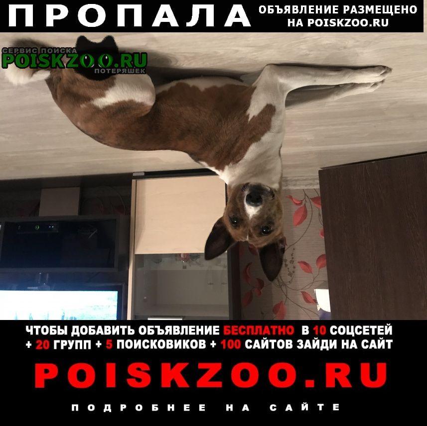 Смоленск Пропала собака 11 апреля убежала, помогите найти