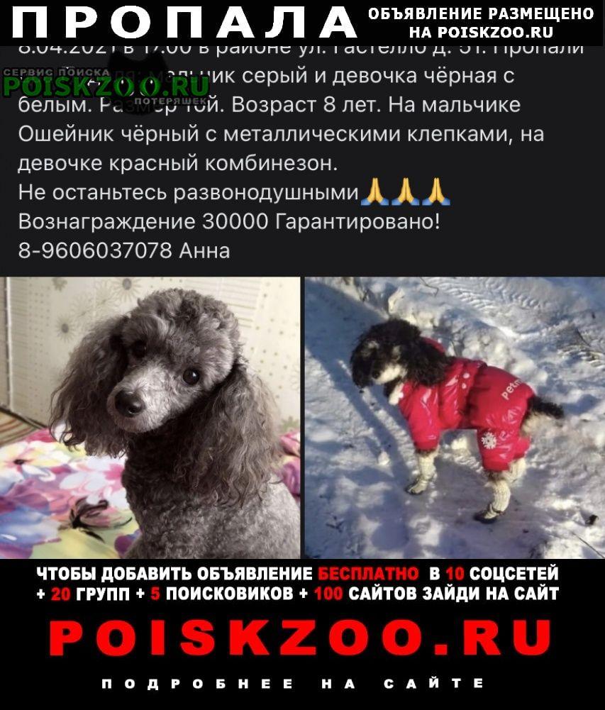 Тула Пропала собака кобель прошу помогите отыскать пожалуйста