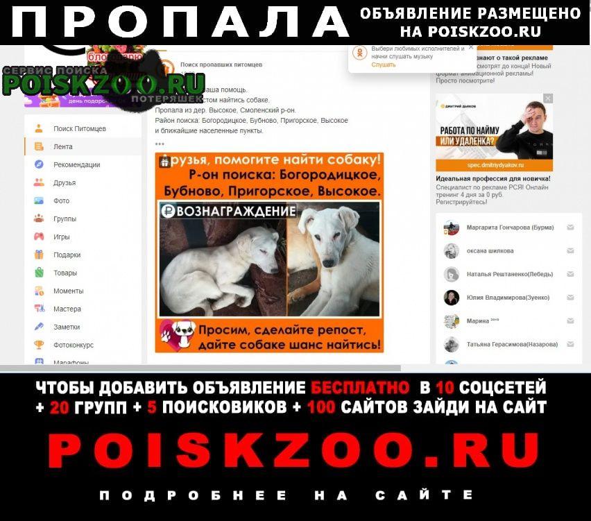 Пропала собака кобель Смоленск